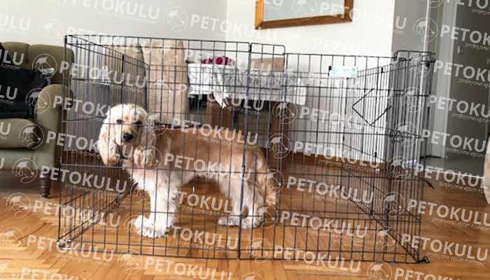 Köpek Eğitim Çiti Tüm Köpek Eğitimlerine Yardımcı Olur