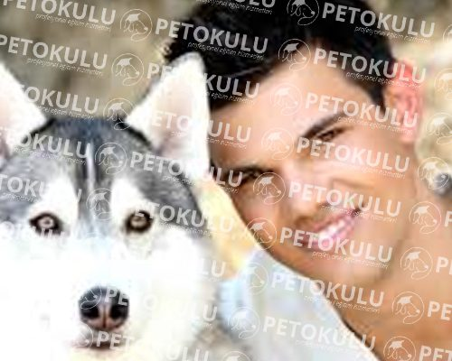 Aktör Köpek (Pet Casting)