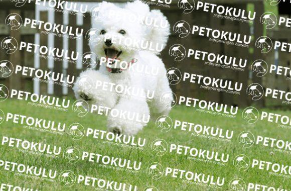 Fransa'nın Milli Köpeği; Kaniş