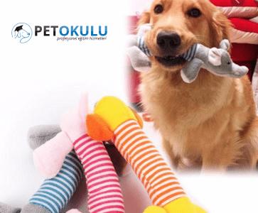 Yavru ve Yetişkin Köpekler İçin Tercih Edilen 6 Köpek Oyuncağı