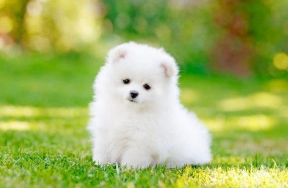 Yavru Köpekler İçin İdeal En İyi 5 ND Yavru Köpek Maması [⭐️TIKLA]
