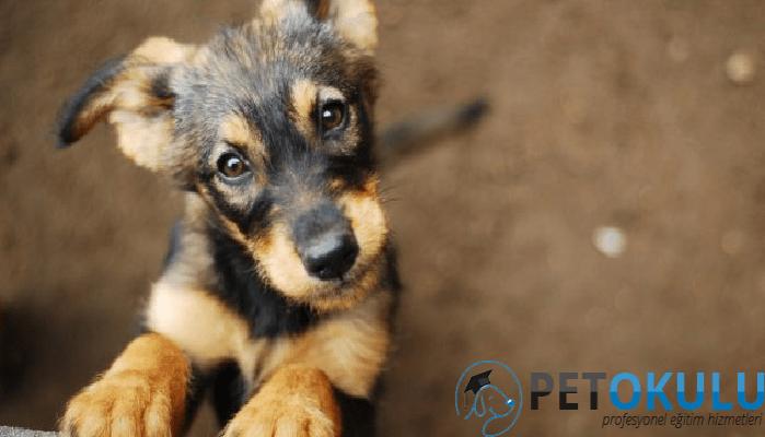 Yavru Köpek Sahiplenme | Satın Alma Sahiplen ✓