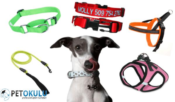 Yeni Yavru Köpek Sahibinin İhtiyacı Olan Malzemeler