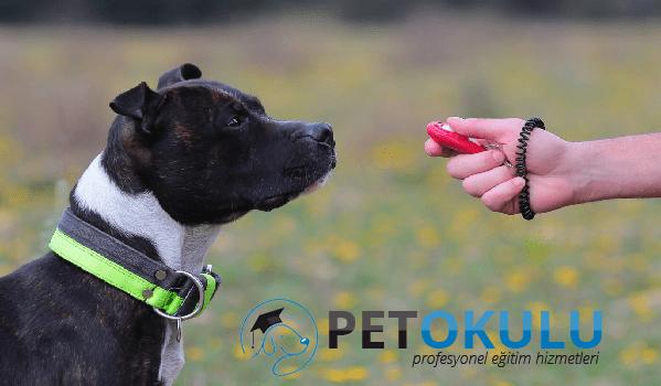 Köpek eğitiminde clicker kullanımı