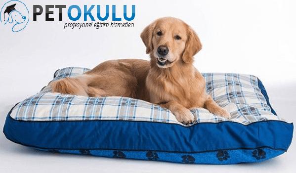 Konforlu köpek yatakları