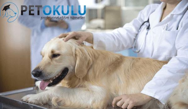 Köpek sağlığı için gerekli malzemeler