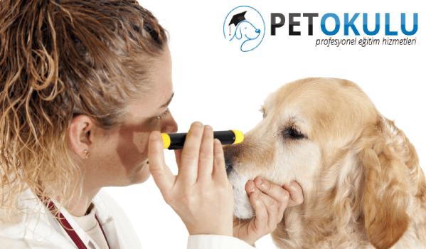 Köpek göz sağlığı için gerekli malzemeler