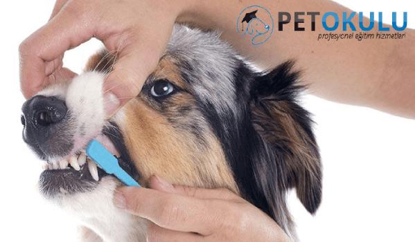 Köpek diş temizliği için gerekli malzemeler