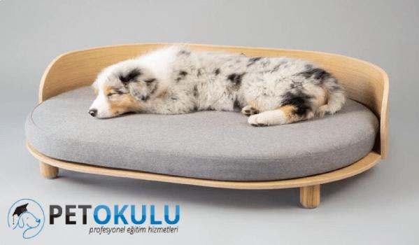 Rahat köpek yatakları