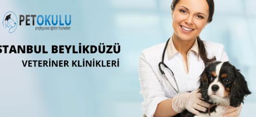 Beylikdüzü Veteriner Klinikleri ✔️