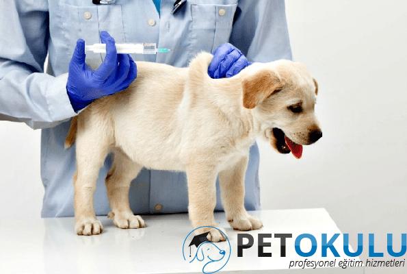 Yavru Köpek Aşı Takvimi
