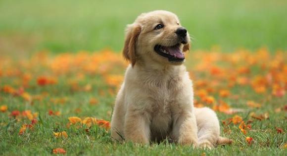 Köpeğinize Uygun En İyi Yavru Köpek Maması